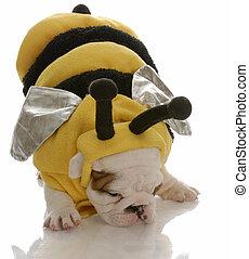 Ein englischer Hund, verkleidet als Biene