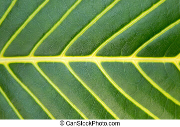 Ein großer, grüner Pflanzenblatt-Makro