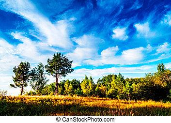 Ein großes grünes Feld mit Bäumen im Hintergrund.