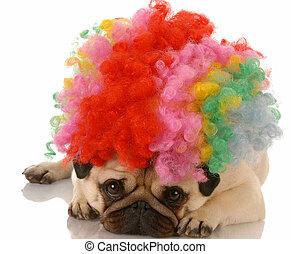 Ein hässlicher Hund, verkleidet als trauriger Clown