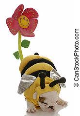Ein Hund, der als Biene verkleidet war, um eine Blume zu bestäuben