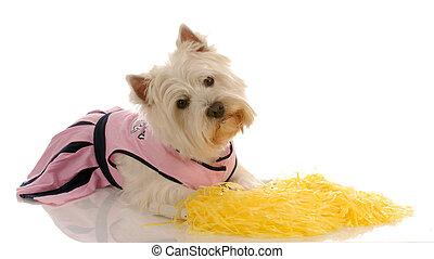 Ein Hund verkleidet sich als Cheerleader
