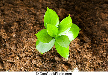 Ein neues Lebenskonzept - grünes Saatgut wächst aus dem Boden