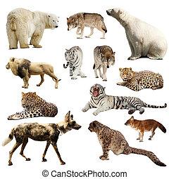 Ein paar räuberische Säugetiere über weiß