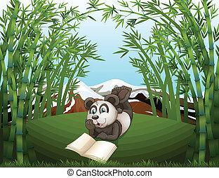Ein Panda, der auf dem Hügel mit Bambus liest