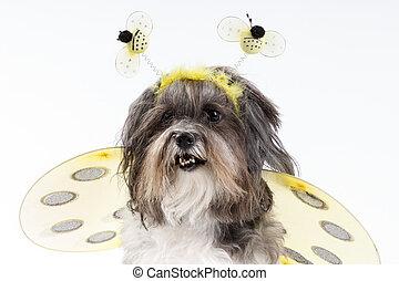 Ein süßer Hund, verkleidet als eine Hummelbiene