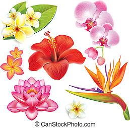 Ein Set tropischer Blumen