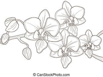 Ein Zweig Orchidee