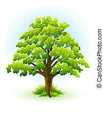 Eine Eiche mit grünem Blatt