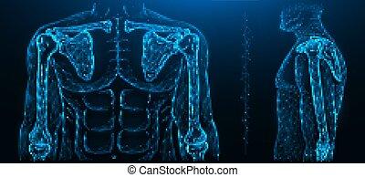 ellbogen, menschliche , polygonal, musculoskeletal, abbildung, modell, joint., gelenk, vektor, schulter, system