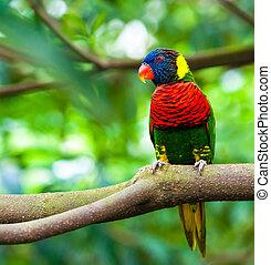 Exotische Papageien sitzen auf einem Ast, wilde Tiere.