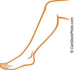 füße, (woman, frau, leg)