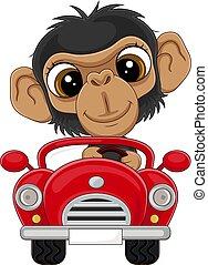 fahren, auto, schimpanse, rotes , baby, karikatur