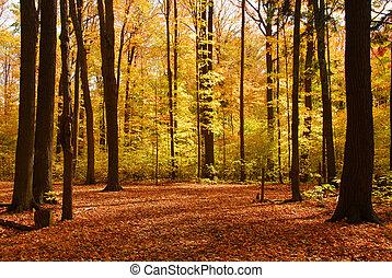 Fall Forstlandschaft
