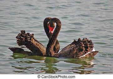 Familienschwan