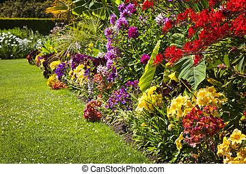 Farbige Gartenblumen
