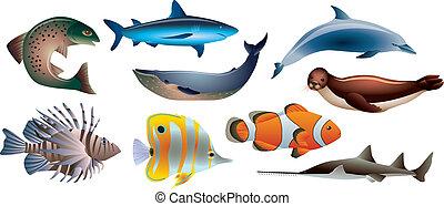 Fisch und Meeresleben