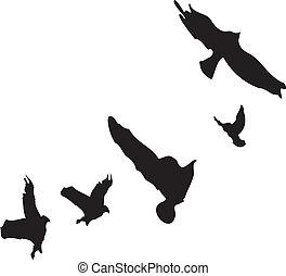 Fliegende Vögel.