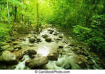 Fluss im Dschungel.