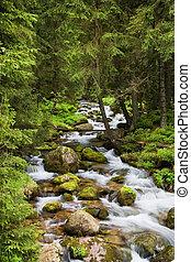 Forest Stream in Tatra-Gebirge