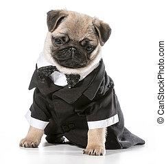 Formaler Hund.