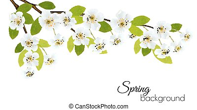 Frühlings Hintergrund mit weißen Blumen. Vector.