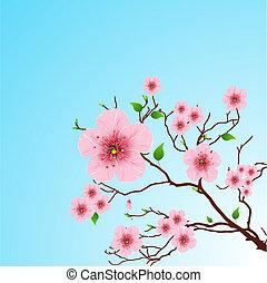 Frühlingsrolle