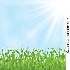Frühlingsrollen mit grünem Gras