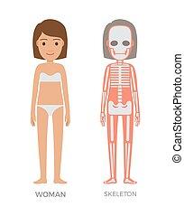 frau, skelett, bunte, koerperbau, banner, struct