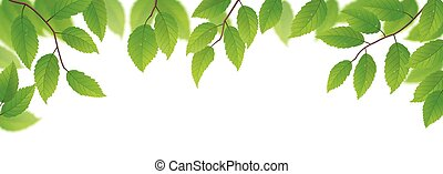 Frische grüne Blätter.