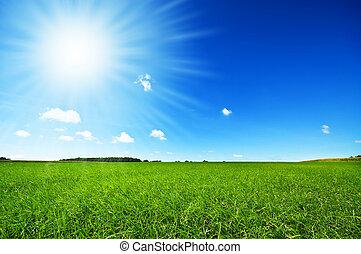 Frisches grünes Gras mit hellblauem Himmel