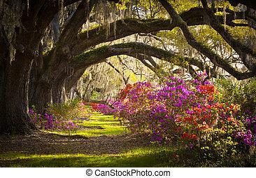 fruehjahr, spanischer , eiche, bäume, plantage, leben, azalee, moos, blühen, sc, charleston, blumen, blüten