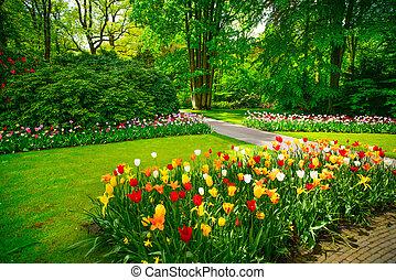 Garten in Keukenhof, Tulpenblumen und Bäume. Niederlande