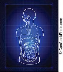 Gastrointestinales System