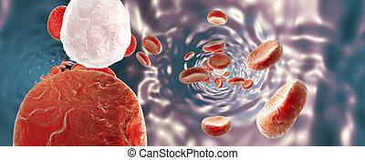 gefäß, blut, erythrocytes