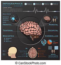 Gehirn und Nervensystem, medizinische infographische Infochart.