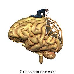 Gehirnrekonstruktion