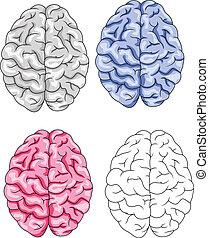 Gehirnvektor