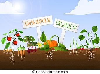 Gemüsegarten-Poster.