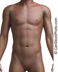 Gesunder männlicher Oberkörper