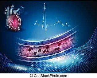 Gesundes Arterienkreuz, normales Kardiogramm und Herzanatomie