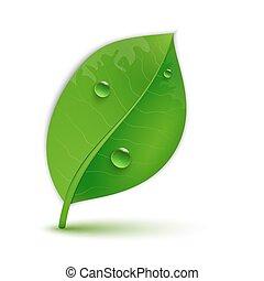 Glänzende grüne Blätter