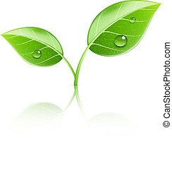 Glossy grüne Blätter