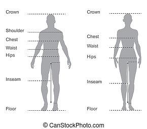 Größendiagramm, Messdiagramm von männlichen und weiblichen Körpermessungen für Kleidung.