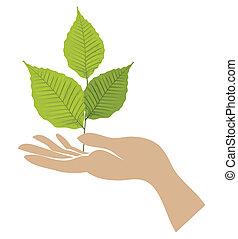 Grünblatt mit Hand. Vector
