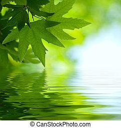 Grüne Blätter, die im Wasser reflektieren, oberflächlich.