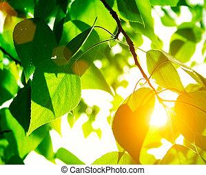 Grüne Blätter mit Sonnenstrahl