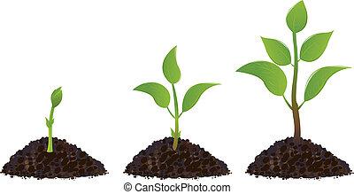 Grüne junge Pflanzen.
