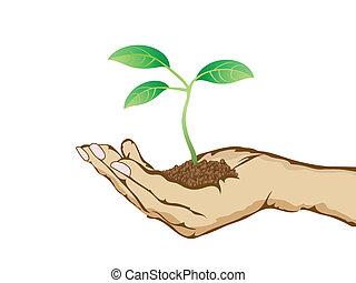 Grüne Pflanze wächst in der Hand