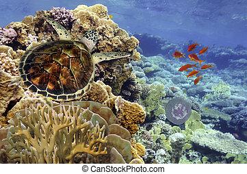 Grüne Schildkröte schwimmt im blauen Ozean.